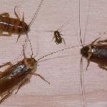 Roaches at Motel 6