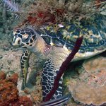Turtle in Flaming Bay