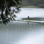  Bay Paddleboarder