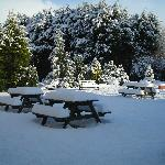 Garden on a winters day