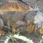 Iguanario Archundia