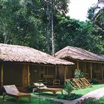 Foto de Jungle Village