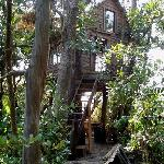  Shola Tree House