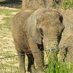 1 of 3 male elephants