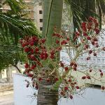 Palm tree berries