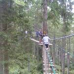 Up in the treetops