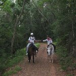 Wilderness Adventures Horse Trails