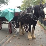Killarney Horse & Carriage Tours