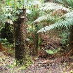 Foto di Tarkine Trails - Tarkine Rainforest Retreat