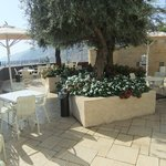Great olive tree lounge bar balcony