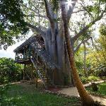 One of our unique treehouses