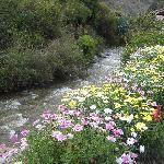 River lined with flowers across the street