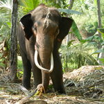 The Millennium Elephant Foundation