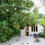 Maldive Due Palme