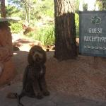  The Dog Friendly Lodge at Sedona