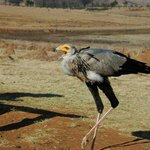 Dullstroom Bird Of Prey & Rehabilitation Centre