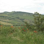 View of Tuscan Countryside from Podere Il Casale