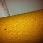 bed bug room 138