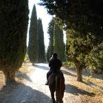riding along a cypress tree lined road