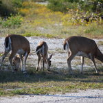Several along Key Deer Blvd