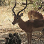 Full-Day Tarangire National Park Tour