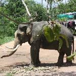  Elephant Village 2