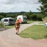 Acorns Naturist Retreatの写真