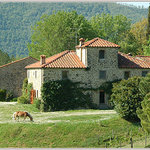 Fattoria il Trebbio - Agriturismo e B&B