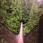 Lynn Canyon Suspension Bridge Foto