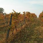 Cascina Sant'Ambrogio's wineyards