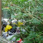 The rubbish tip in the garden