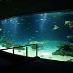 Sunshine Aquarium