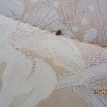  Bed Bug 2