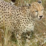 Kisima Tours and Safaris - Day Tours