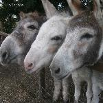  Donkeys