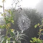 Cobweb in the mist at Killagorden Cottage