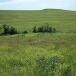 Konza Prairie Research Natural Area
