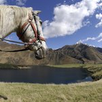 Ben Lomond Station Horse Trekking Company Day Tours