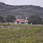  Inn with Vineyards