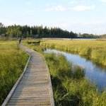Wooden walking trails through the wetlands