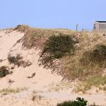 Nearby sand dunes...so pretty!