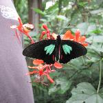 At the butterfly farm just across the way