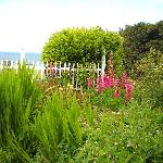 Foto di Sea Cliff Gardens Bed & Breakfast