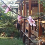 Foto de Bawley Bush Cottages