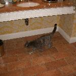 Bathroom and our cat