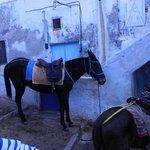 Santorini Donkey Tours
