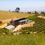 Greatest Cape Wine Day Tours