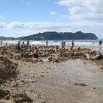 Hot Water Beach - just down the road.