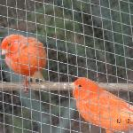  Aviary next door to hotel