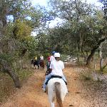 Horse back riding as a group, down old Florida trails.